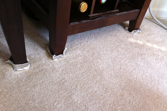 277CarpetStainLegsAfter